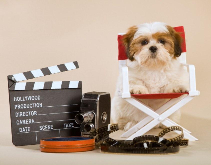 Anuncios publicitarios de animales | Blog | Mascotea