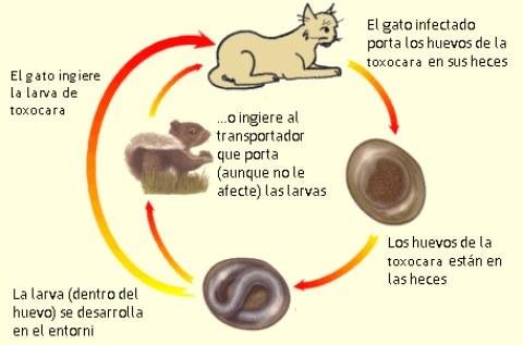 ¿Cómo saber si tus animalitos tienen parásitos?